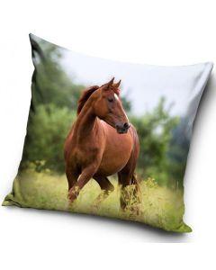 Häst kudde